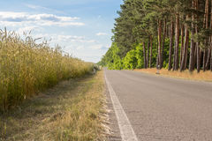 Empty road  near trees and field Royalty Free Stock Images