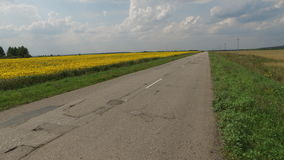 Empty road next to the sunflowers Stock Photos
