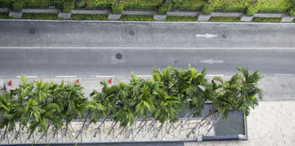 Empty road with palm tree. Top view landscape royalty free stock photography