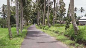 Empty road between the palm trees and green tropical jungles for traveling. Exotic indonesian village surrounded in wild. Nature that are good for adventure stock footage
