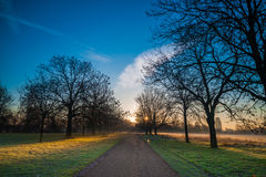 Empty Road in a park during a winter sunrise Stock Image
