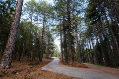 Empty road passing through the forest Stock Photography