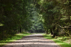 Empty road perspective in the forest. Long empty road perspective in the forest Royalty Free Stock Photo