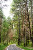 Empty road in pine forest in sunny summer day, Orlovskoye Polesi Stock Photos