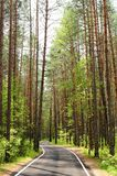 Empty road in pine forest in sunny summer day, Orlovskoye Polesi Royalty Free Stock Images
