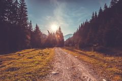 Empty road in pine tree forest. Nature landscape Royalty Free Stock Image
