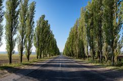 Empty road with poplar Royalty Free Stock Photo