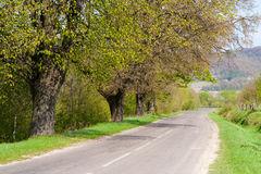Empty road running along green trees Royalty Free Stock Photography
