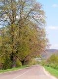Empty road running along trees Stock Photo