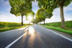Empty road with slight motion blur. Empty road with trees and slight motion blur Stock Image