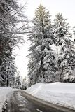 Empty road in the snowbound wood. Winter scenery in Slovenia Stock Photos