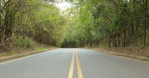 Empty road surrounded by green closed vegetation Royalty Free Stock Photos