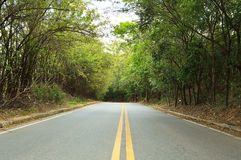 Empty road surrounded by green vegetation Stock Photography