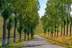 Empty Road with tall trees. Empty Road with tall trees beside it summer time Eastern Europe stock photography