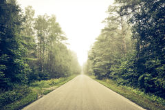 Empty road though forest Royalty Free Stock Image