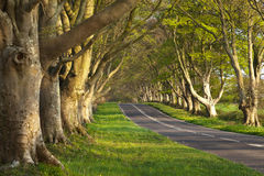 Empty Road Between the Trees. An empty road in the English countryside going between two rows of trees Royalty Free Stock Photography