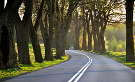 Empty road between trees. Road through a lot of trees, sun ray Royalty Free Stock Photos