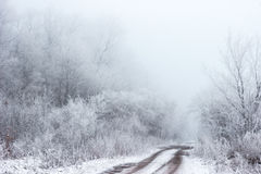 Empty Road With Trees Filled With Snow Stock Image
