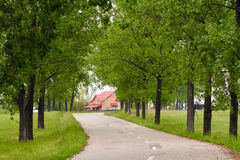 Empty road with trees. Landscape with an empty road going through poplar trees Stock Image
