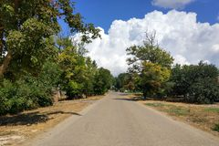 An empty road between the trees. On a sunny day stock photo