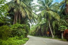 Empty road among the tropical jungle on the Koh Phangan island, Thailand. Empty modern road among the green tropical jungle with coconuts trees on the Koh stock images