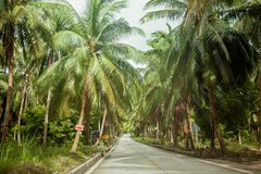 Empty road among the tropical jungle on the Koh Phangan island, Thailand. Empty modern road among the green tropical jungle with coconuts trees on the Koh royalty free stock images