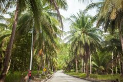 Empty road among the tropical jungle on the Koh Phangan island, Thailand. Empty modern road among the green tropical jungle with coconuts trees on the Koh royalty free stock image