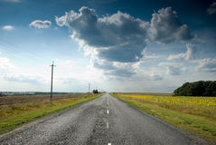 Empty road with a view sunflowers Royalty Free Stock Photos