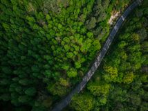 Empty road into wilderness,aerial drone  view Royalty Free Stock Images