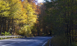 Empty road in the wood Stock Photos