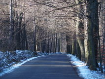 Empty road in wooden avenue in winter. Empty road in wooden avenue in BIELSKO-BIALA  with two rows of trees sides in cold winter day, POLAND, DECEMBER 2016 Royalty Free Stock Images