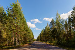 Empty road in the woods Stock Image