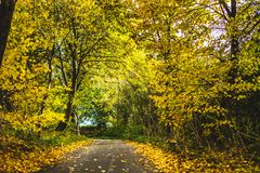 Empty roadway among autumnal trees. During autumn period with bright foliage royalty free stock photography