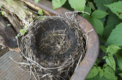 Empty Robins Nest Royalty Free Stock Images