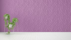 Empty room interior design, purple decorated molded panel, wooden white floor and potted plant, modern architecture background. With copy space, template mockup vector illustration