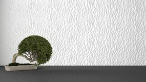 Empty room interior design, white decorated molded panel, wooden gray floor and potted plant, modern architecture background with. Copy space, zen template royalty free illustration