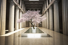 Cherry tree in the interior of a building royalty free stock photos