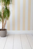 Empty room with striped wall. Empty room background with striped yellow wallpaper a wooden floor and a plant Stock Photography