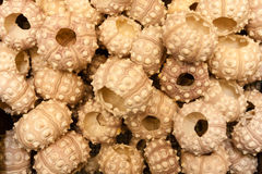 Empty round seashells Stock Photos