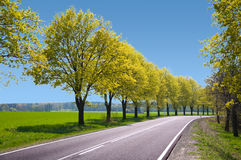 Empty route with trees Stock Photo
