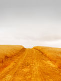 Empty Rural Road. With dry grass on the sides dissappearing into the stormy sky Royalty Free Stock Images