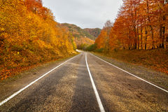 Empty rural road in Arkhyz Royalty Free Stock Images