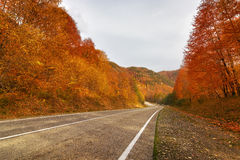 Empty rural road in Arkhyz Stock Images