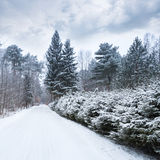 Empty rural road covered with snow Royalty Free Stock Image
