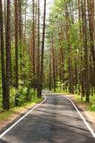 Empty rural road at pine forest Royalty Free Stock Photos