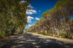 Empty rural road surrounded with trees Sardegna, Italy. Empty rural road surrounded with trees placing shadows. Sardegna, Italy stock images