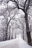 Empty rural winter road with tree alley and fog Royalty Free Stock Image