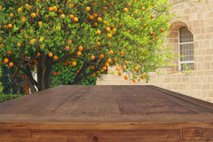 Empty rustic table in front of countryside orange tree background. Product display and picnic concept Stock Photography