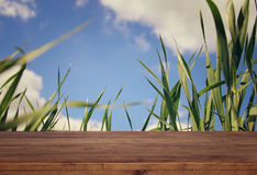 Empty rustic table in front of low angle view of fresh grass Stock Photos