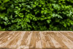 Empty rustic wood table top on blurred parsley  background in th Royalty Free Stock Photos